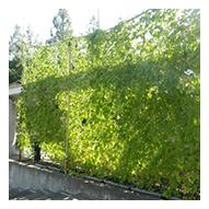 お家や地域でできる「自然の作り方・自然の再生」